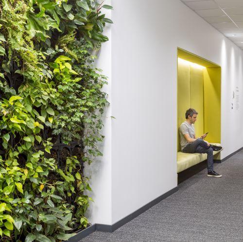 pared verde oficinas